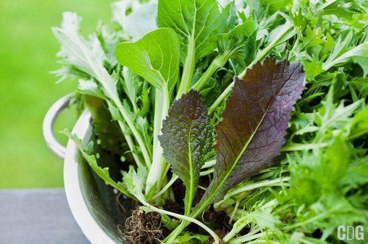 Szpinak, zioła i sałaty w durszlaku