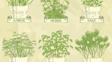 Grafika doniczki z ziołami
