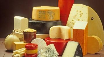 wiele gatunków sera