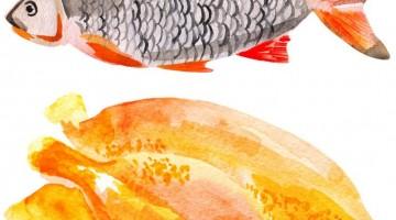 ryba i drób